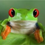 Imagen de perfil de JAVIER